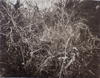 Thicket, photogravure